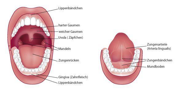 Zahnlücke, Sprachstörungen durch Lippen-/Zungenbändchen?